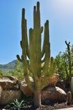 Cactus, Gran Canaria, Spain Royalty Free Stock Photography