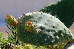 Cactus grande y espinoso fotografía de archivo libre de regalías