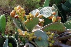 Cactus grande y espinoso fotos de archivo