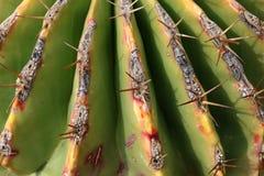 Cactus grande y espinoso imagen de archivo libre de regalías
