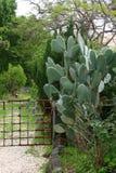 Cactus grande y espinoso imagen de archivo