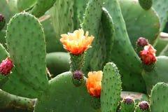 Cactus grande y espinoso foto de archivo