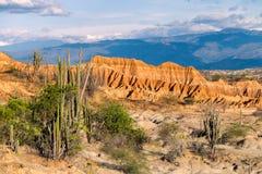 Cactus grandes en el desierto rojo, desierto del tatacoa, Colombia, latín Amer fotografía de archivo libre de regalías