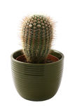 Cactus in a green pot Stock Images