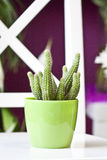 Cactus in green pot. Cute cactus in green pot Royalty Free Stock Images