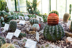 Cactus greenhouse Royalty Free Stock Photos