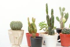 Cactus Royalty Free Stock Photo