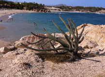 Cactus grow on the beach in Mexico. Blue clean water, no crowds an ideal vacation place. Cabo San Lucas in Baja Stock Photography