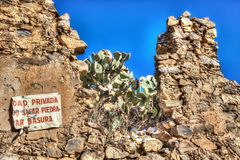 Cactus growing on abandoned wall royalty free stock photography