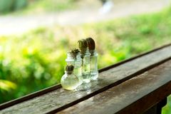 Cactus growing on glass bottle of water, reuse glass bottle for plant. plant in glass bottle, cactus in the garden. Mini succulent flowers, glass of bottle Royalty Free Stock Photo