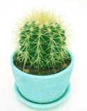 Cactus (grusonii di Echinocactus) Fotografia Stock Libera da Diritti