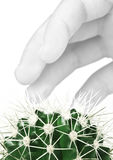 Cactus and hand Royalty Free Stock Photography