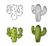 Cactus hand drawing and colored to natural green lime with shadows. vector illustration