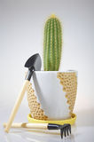 Cactus and Hand Gardening Tools Royalty Free Stock Images