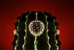 Cactus hard ligth Stock Photo
