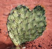 Cactus Heart Stock Photo