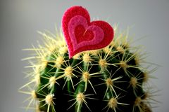 Cactus and heart Royalty Free Stock Photos