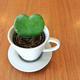 Cactus heart. In a cup Royalty Free Stock Image