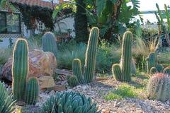 Cactus hechos excursionismo con la mañana Sun Fotos de archivo libres de regalías