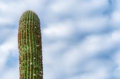 Cactus, hemel en wolken stock foto