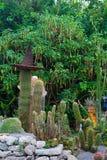 Cactus hermoso en el jardín botánico de Giardini Ravino en los isquiones isla, Italia imágenes de archivo libres de regalías