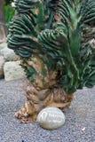 Cactus hermoso en el jardín botánico de Giardini Ravino en los isquiones isla, Italia imagenes de archivo