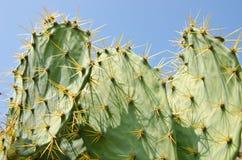 Cactus het groeien royalty-vrije stock fotografie