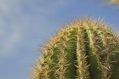 Cactus in het oude westen, Doodsvallei Stock Fotografie