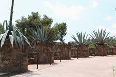 Cactus in het park Gaudi. Stock Afbeeldingen