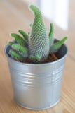 Cactus in het vaasdecor Stock Afbeelding