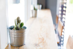 Cactus in het vaasdecor Royalty-vrije Stock Afbeeldingen