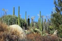 Cactus hill. Various cactus plants and big rocks Stock Photos