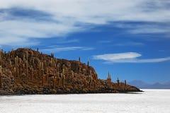 Cactus hill. At Isla de Pescadores, Salar de Uyuni, Bolivia Royalty Free Stock Photography