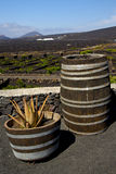 Cactus home viticulture winery lanzarote spain geria vine scr. Cactus home viticulture winery lanzarote spain la geria vine grapes wall crops cultivation barrel stock images