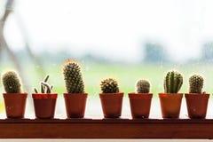 Cactus horizontal réglé dans mis en pot en plastique Photos libres de droits