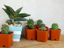 Cactus and house plant collection Royalty Free Stock Image