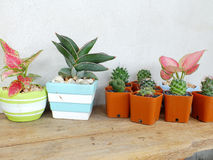 Cactus and house plant collection Royalty Free Stock Photo