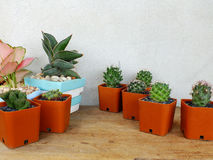 Cactus and house plant collection Royalty Free Stock Images