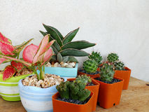Cactus and house plant collection Stock Image