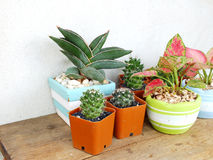 Cactus and house plant collection Royalty Free Stock Photos