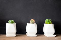 Cactus and house plant decoration create concept Royalty Free Stock Images