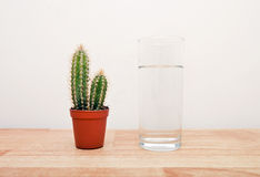 Cactus houseplant next to a full glass of water Royalty Free Stock Images