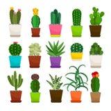 Cactus houseplants in flower pots set vector illustration