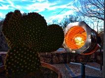 Cactus illuminé par une lampe de cinéma photo libre de droits