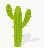 Cactus illustration Stock Photo