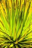 Cactus In Detail In The Desert Of Arizona Royalty Free Stock Image