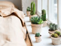 Free Cactus In Interior, Window In A Bed Room Stock Photos - 109237233