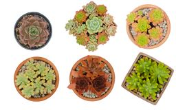 Cactus In Pots Isolated On White Background Royalty Free Stock Photo