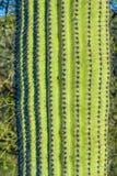 Cactus In The Desert Stock Photo