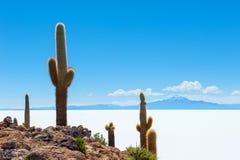 Cactus on Incahuasi island, Salar de Uyuni, Bolivia Stock Image